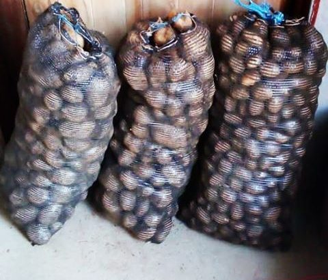 20kg Potatoes for sale