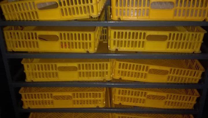 1056 capacity Incubator